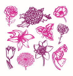 Beautiful flowers - color hand drawn vector