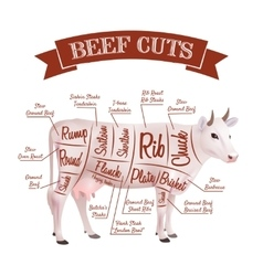 Beef Cuts vector image