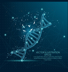dna form low poly wire frame on blue background vector image