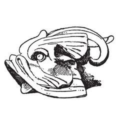 Dolphin head frame is a animal design vintage vector