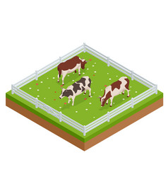 Isometric brown and white cows in a grassy field vector