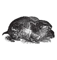 Lemming vintage vector