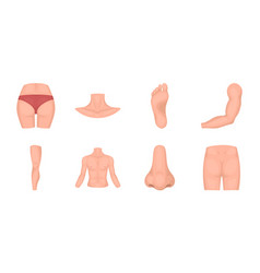 Part of the body limb icons in set collection for vector