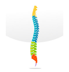 Spine bone detailed vector