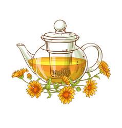 calendula tea vector image
