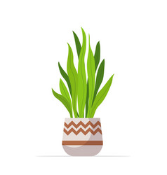 decorative houseplant planted in ceramic pot vector image