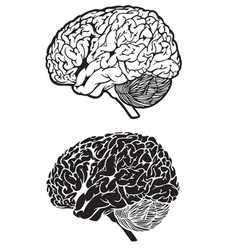 human brain cartoon set vector image