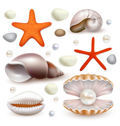 Realistic seashell and starfish icon set vector