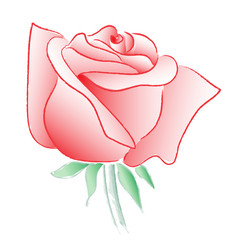 Rose watercolor line drawing on white background vector