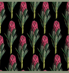 Seamless pattern protea sugarbushes flowers vector