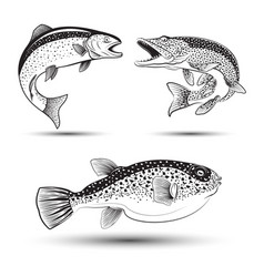 Set fishes isolated vector