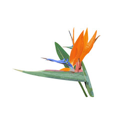 Strelitzia tropical plant collection with hand vector