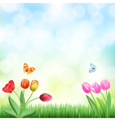 grass tulips background vector image