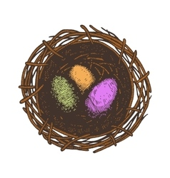 Easter eggs and nest Isolated vector image vector image