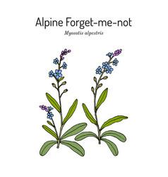 Alpine forget-me-not myosotis alpestris vector