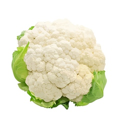 Cauliflower isolated on white background vector image