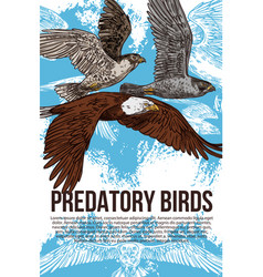 eagle falcon and hawk predatory birds vector image