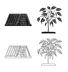 Greenhouse and plant icon vector