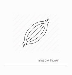 Muscle fiber icon isolated vector