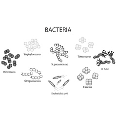 Set of bacteria Black and white Staphylococcus vector image