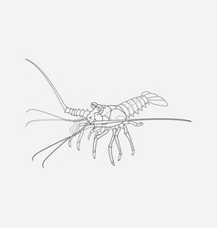 Spiny lobster icon line element vector