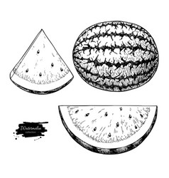 watermelon and slice drawing set isolated vector image
