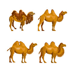collection of bactrian camels vector image