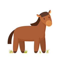farm animal brown horse on white vector image