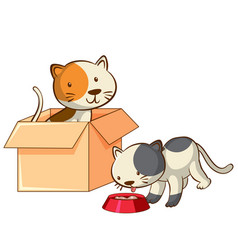 isolated picture two cats in box vector image