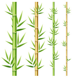 realistic 3d detailed bamboo shoots set vector image