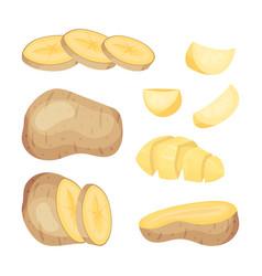 Set potatoes on white vector