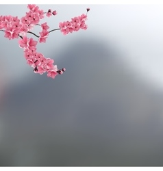 The branch with buds of pink cherry blossoms vector
