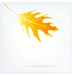 Autumn card with falling leaf on white background vector image