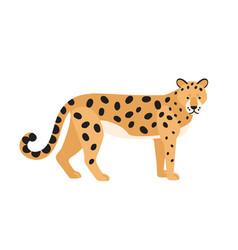 jaguar isolated on white background stunning wild vector image