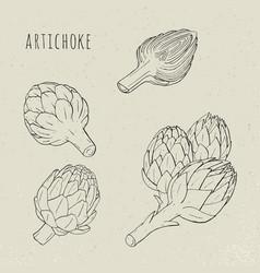 artichoke set hand drawn botanical plant vector image vector image