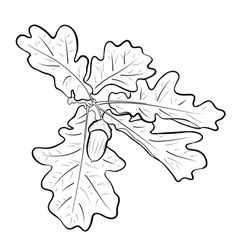 acorn with the oak branch vector image