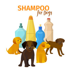 animal grooming salon dog hair vector image