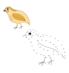Connect the dots game quail vector