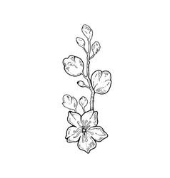 Sakura flowers blossom bud hand drawn line ink vector