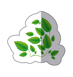 green branches with leaves icon vector image