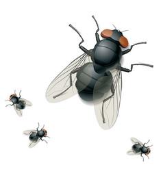 housefly vector image