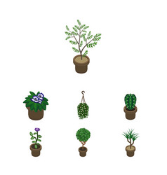 Isometric houseplant set of houseplant peyote vector