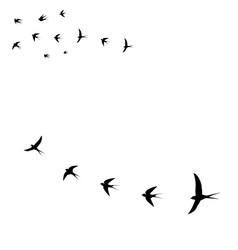 Seagulls bird icons vector