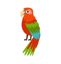 colorful macaw parrot colorful vector image