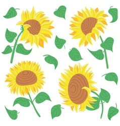 beautiful colorful sunflowers and leaves vector image vector image