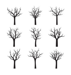 black naked trees without leaves vector image