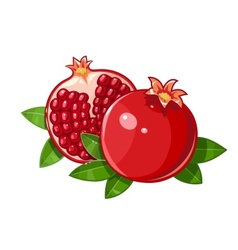 Couple juicy ripe pomegranate vector image