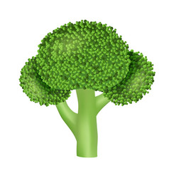 Natural broccoli icon realistic style vector