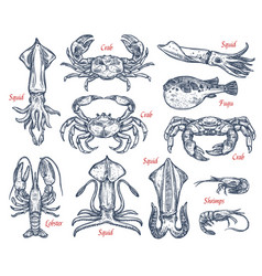 Seafood animal sketch set of fish and crustacean vector