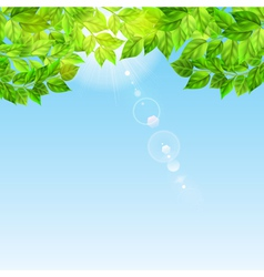 Blue sky with sun and green leaves vector